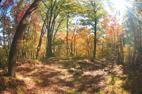 紅葉の女神岳城跡の本郭跡と木もれ日の写真素材 [FYI02826675]