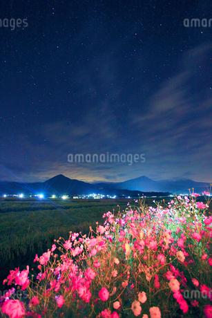 コスモスのライトアップと稲穂実る田園と夫神岳と女神岳の写真素材 [FYI02826690]