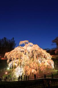 ライトアップされた滝桜の写真素材 [FYI02826699]