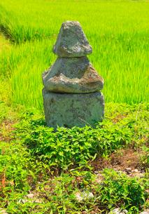 小島権兵衛の墓の写真素材 [FYI02826783]