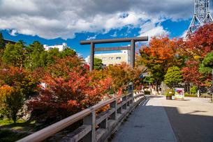 松本市 秋の四柱神社の写真素材 [FYI02826812]