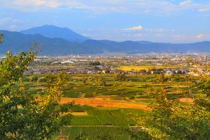 妻女山展望台から望む川中島古戦場と飯縄山の夕景の写真素材 [FYI02826935]