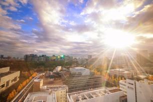 皇居と都心のビル群と国会議事堂とイチョウ並木と朝日の写真素材 [FYI02826969]