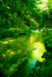 横川渓谷・新緑映す横川の清流の写真素材 [FYI02827030]