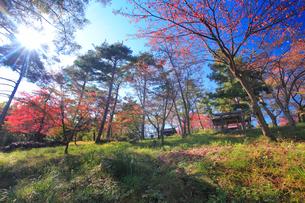 陣場山城跡の神明宮と木もれ日の写真素材 [FYI02827062]