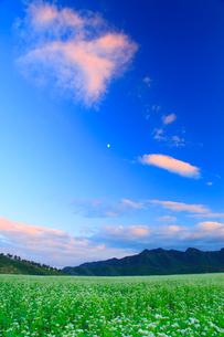 花咲く蕎麦畑と夕焼けの雲と月の写真素材 [FYI02827115]