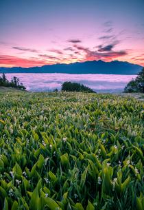 入笠すずらん山野草公園より雲海の八ヶ岳連峰と朝焼けの空の写真素材 [FYI02827220]