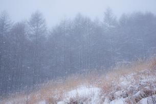 雪の日霧ヶ峰高原の写真素材 [FYI02827243]