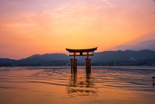 夕焼けと厳島神社大鳥居の写真素材 [FYI02827292]