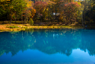 青い池と黄葉の写真素材 [FYI02827409]