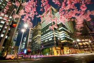 シダレ桜と大手町高層ビル群夜景の写真素材 [FYI02827447]
