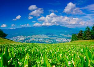 ドイツスズランの花畑と八ケ岳の写真素材 [FYI02827536]