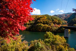 秋のもみじ湖 箕輪ダム の写真素材 [FYI02827547]
