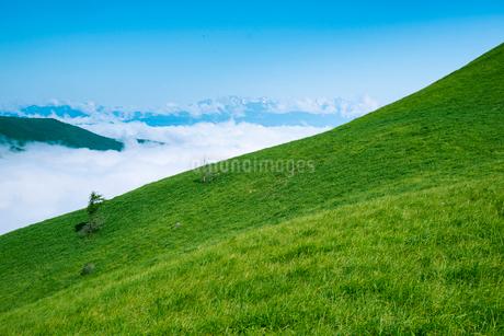 三峰山より雲海に浮かぶ北アルプス連峰の写真素材 [FYI02827576]