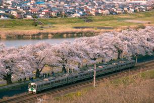 満開の白石川堤一目千本桜とJR東北本線客車列車の写真素材 [FYI02827594]