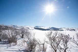 八島ヶ原湿原雪景色の写真素材 [FYI02827660]