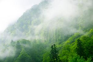 称名渓谷・霧に包まれる悪城の壁の写真素材 [FYI02827680]