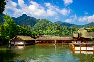 厳島神社の写真素材 [FYI02827743]