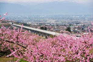 桃の花とリニアモーターカー山梨実験線の写真素材 [FYI02827797]