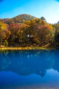 青い池と黄葉の写真素材 [FYI02827856]