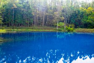 コバルトブルーの笹原貯池の写真素材 [FYI02827873]