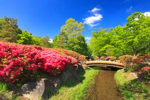 八幡原史跡公園のツツジと小川の写真素材 [FYI02827886]