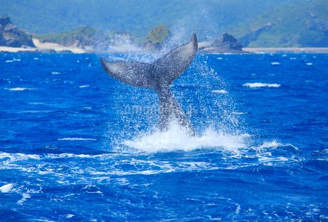 ザトウクジラのテールスラップと安慶名敷島の岩礁の写真素材 [FYI02828321]