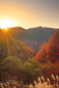 ゼロ磁場の水場付近から望む分杭峠の紅葉の樹林と夕日の写真素材 [FYI02828439]