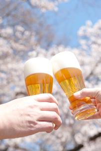 桜と生ビールで乾杯するカップルの手の写真素材 [FYI02828578]