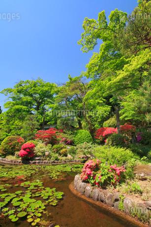 大輪寺のツツジと庭園の写真素材 [FYI02828663]