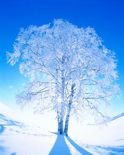 霧氷・一本の木の写真素材 [FYI02828688]