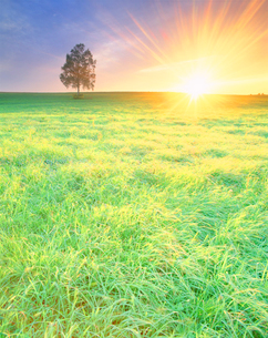 牧草地と白樺木立夕景の写真素材 [FYI02828717]