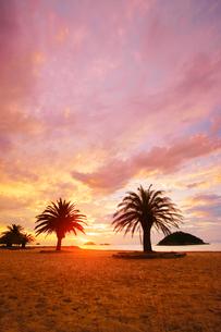小部ビーチとナツメヤシと夕日と小島の写真素材 [FYI02828727]