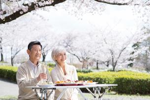 花見でシャンパンを飲む老夫婦の写真素材 [FYI02828790]