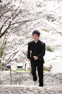 桜と中学生男子の写真素材 [FYI02828973]