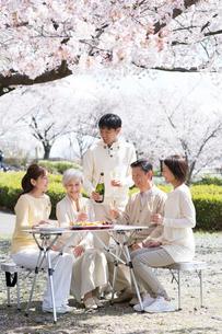 花見でシャンパンを飲む三世代家族の写真素材 [FYI02828980]