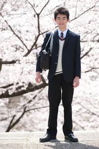 桜と男子高校生の写真素材 [FYI02829138]