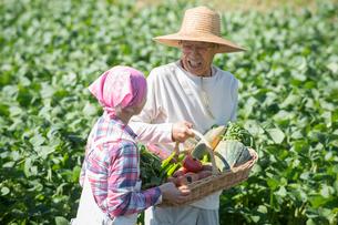 畑で収穫した野菜を見せるシニア夫婦の写真素材 [FYI02829207]
