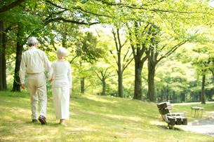 公園を散歩するシニア夫婦後姿の写真素材 [FYI02829270]