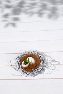 巣の中の卵と双葉の写真素材 [FYI02829280]