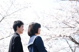 桜と中学生男女の写真素材 [FYI02829322]