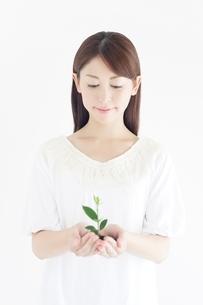 苗を持つ女性の写真素材 [FYI02829412]