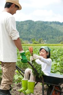 畑の中で父が押す一輪車に乗る女の子の写真素材 [FYI02829612]