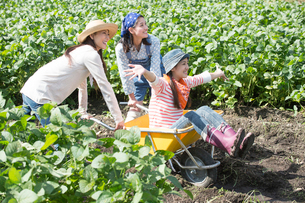 畑で一輪車で遊ぶ女性三人の写真素材 [FYI02829616]