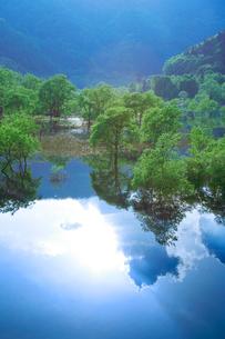 新緑の湖畔林と宝仙湖の写真素材 [FYI02829640]