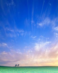 親子の木夕景の写真素材 [FYI02829677]