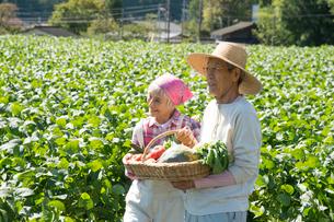 畑で収穫した野菜を見せるシニア夫婦の写真素材 [FYI02829881]