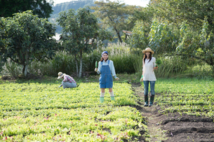 畑で人参を収穫する女性2人の写真素材 [FYI02829949]