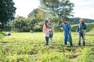畑で人参を収穫する娘2人と両親の写真素材 [FYI02830004]