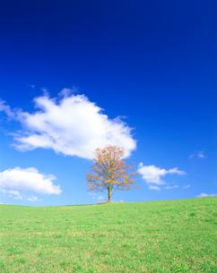 秋のハルニレ木立と牧草地の写真素材 [FYI02830011]